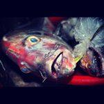 Rybi Ryj