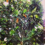 Mangosy