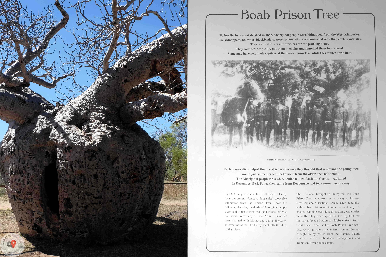 Prison Tree. 14 sierpnia