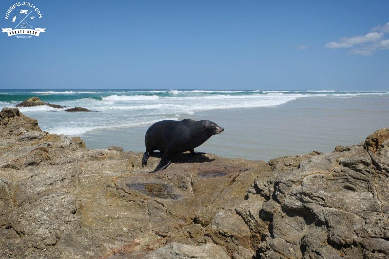 OKOLICE BRISBANE: Patrz foka! Czyli o tym, jak wypatrywaliśmy wielorybów na wyspie North Stradbroke Island