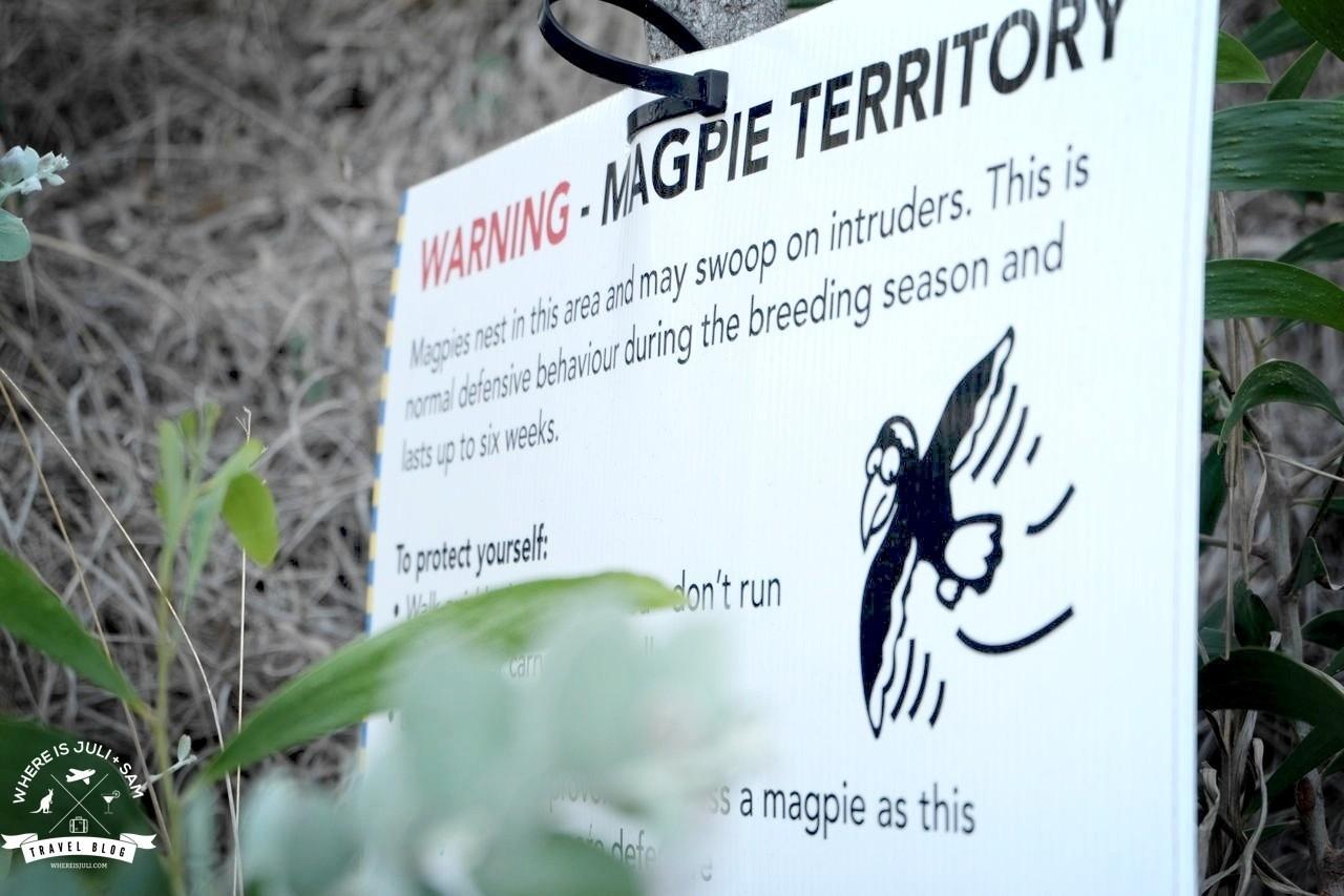 Magpie Territory