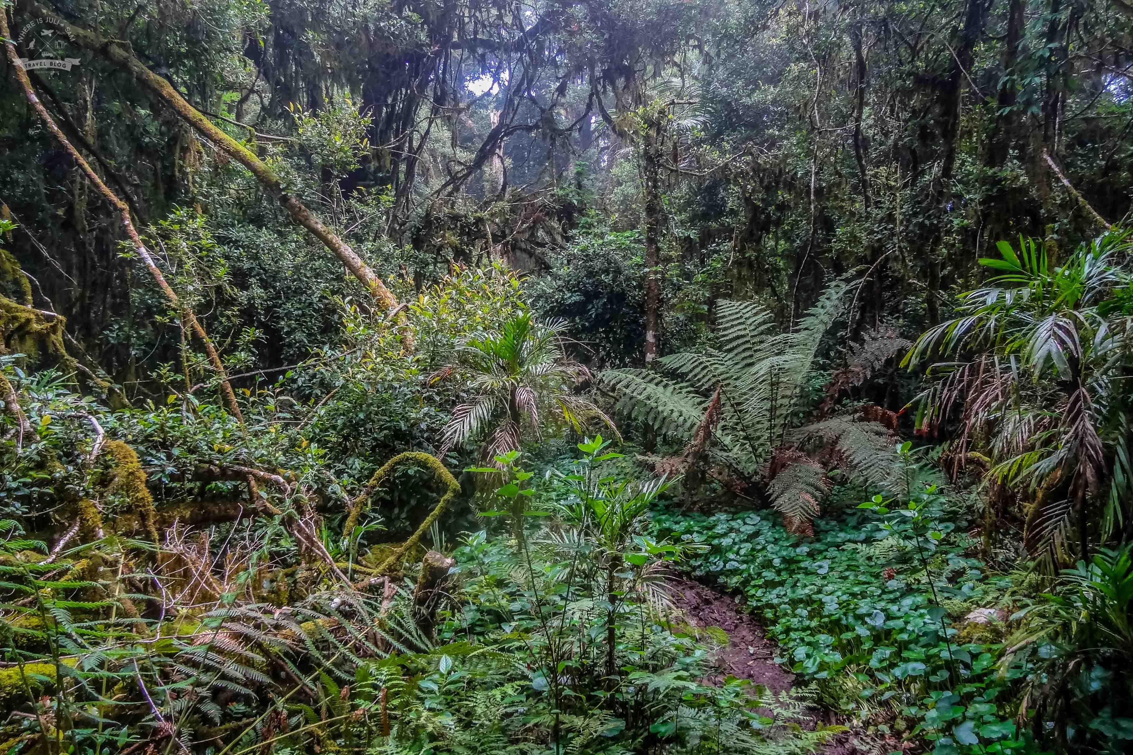dzieki las deszczowy