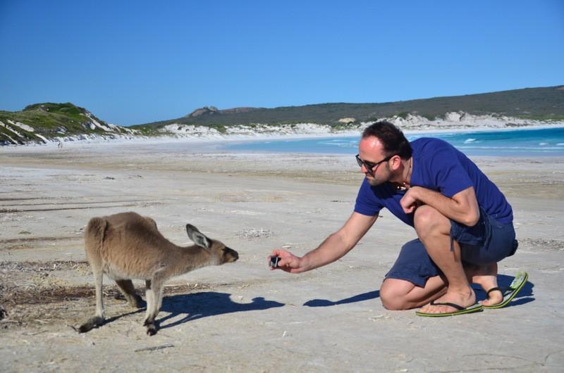 spotkanie z kangurem