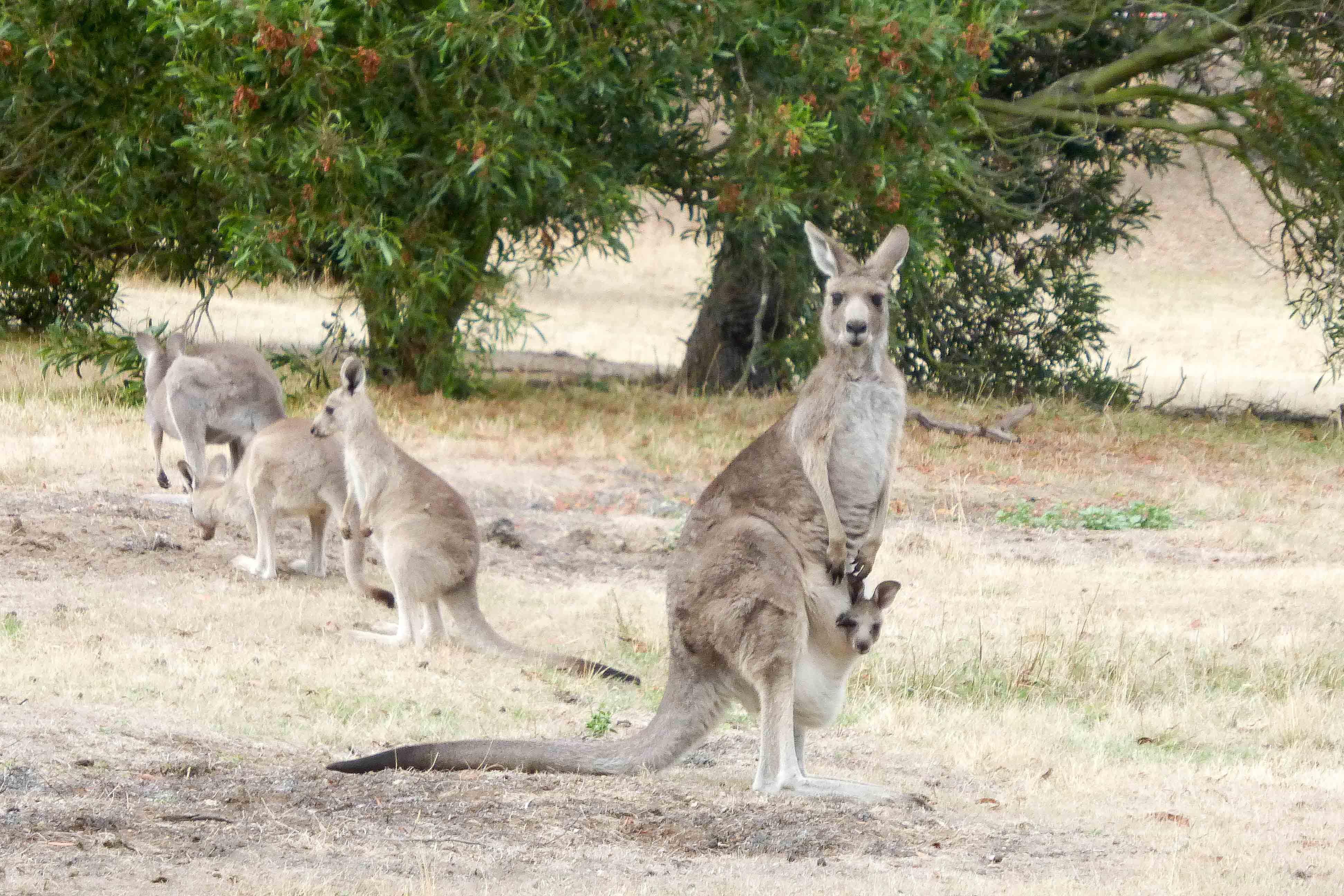 WASZA AUSTRALIA: Pod palmami, na wschodnim wybrzeżu