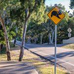 Magnetic Island Znak Koala
