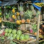 Wyspa Bohol Owoce
