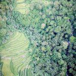 Wyspa Bohol Pola Ryzowe