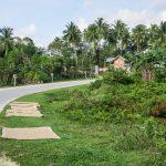 Wyspa Bohol Ryz Przy Drodze