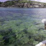 Wyspa Lizard Australia