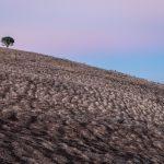 Dolina Barossy Lato