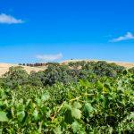 Winnice Dolina Barossy Australia Poludniowa